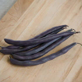 Royal Burgundy Bush Beans