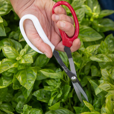 Garden Scissors Shears and Pruners