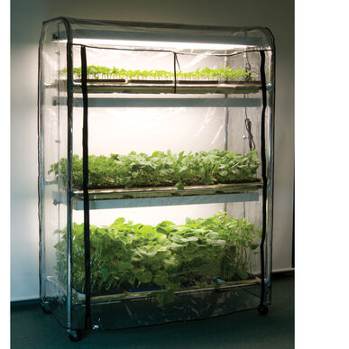 Full-Size Seedling Light Cart – 12 Trays, 480 Watts Grow Lights and Carts