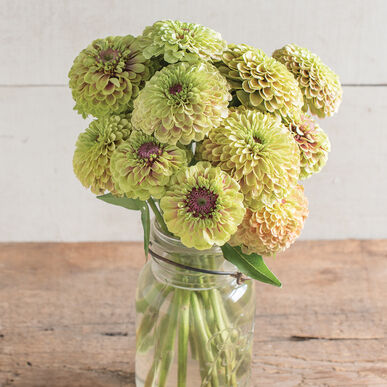 Queen Lime with Blush Zinnias
