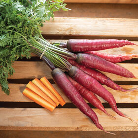 Dragon Colored Carrots