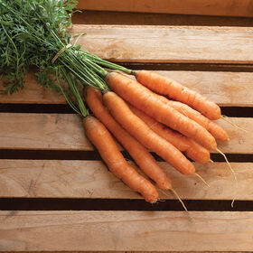 Aranka Early Carrots