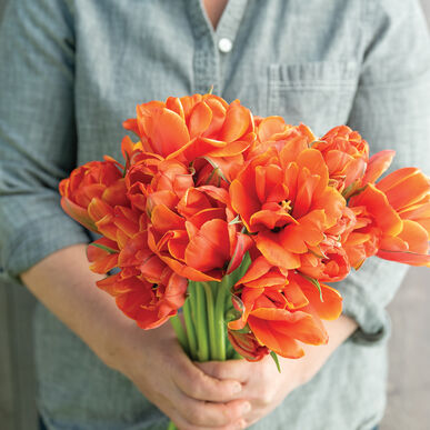 Queensday Tulips