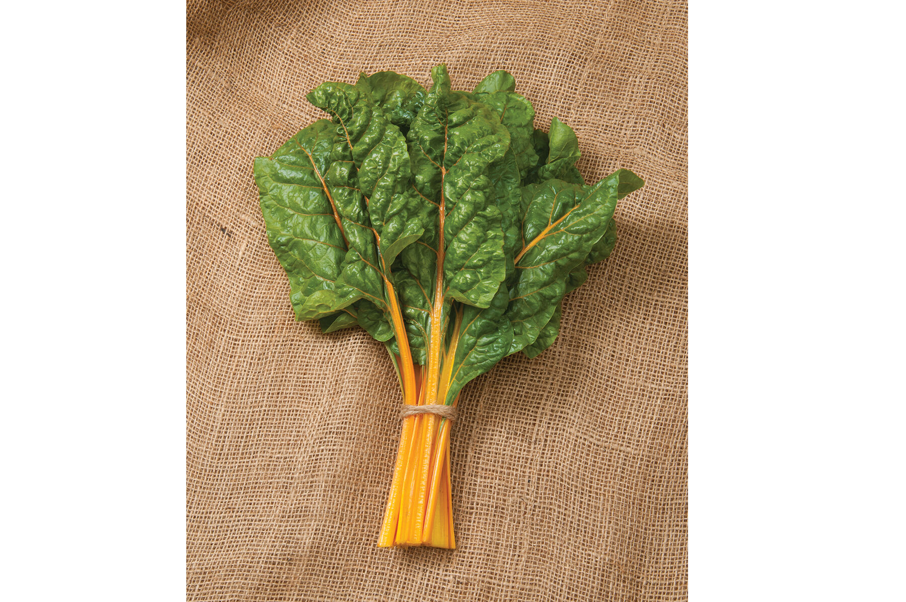 GMO FREE 40 Organic Seeds BRIGHT YELLOW STEMS Swiss Chard Seeds DELICIOUS
