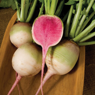Red Meat Watermelon Radish Seeds Johnny S Selected Seeds