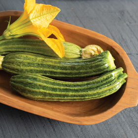 Pantheon Summer Squash