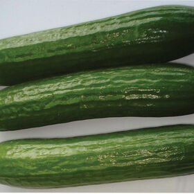 Amiga Seedless and Thin-skinned Cucumbers