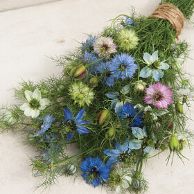 Love-In-A-Mist Nigella