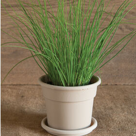Chive Herb Disks