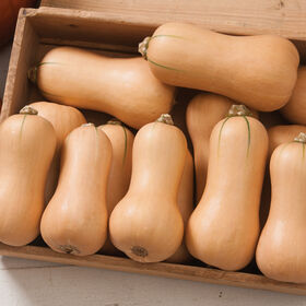 Butterscotch PMR Winter Squash