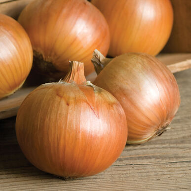 Patterson Full-Size Onions