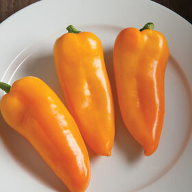 Cornito Giallo Sweet Peppers