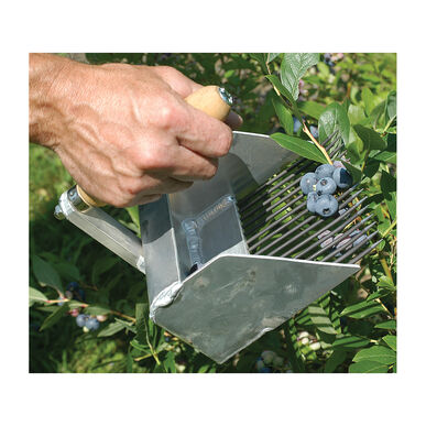 Highbush Blueberry Rake Harvesting Tools
