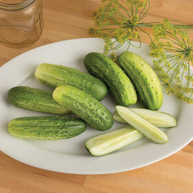 Cool Customer Pickling Cucumbers