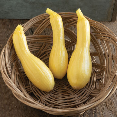 Goldfinch Summer Squash