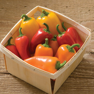Lunchbox Pepper Mix Sweet Peppers