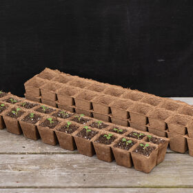 20 Cell Fertil Pots Strip – 10 Count Biodegradable Pots
