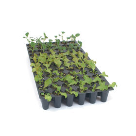 Pro-Tray 72 Cell Flats – 5 Count Trays, Domes, and Flats