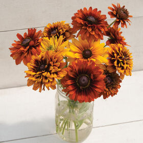 Cherokee Sunset Mix Rudbeckia (Black-Eyed Susan)
