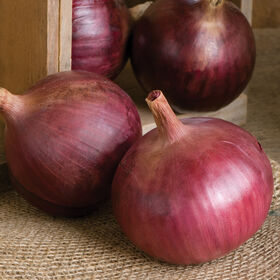 Cabernet Full-Size Onions