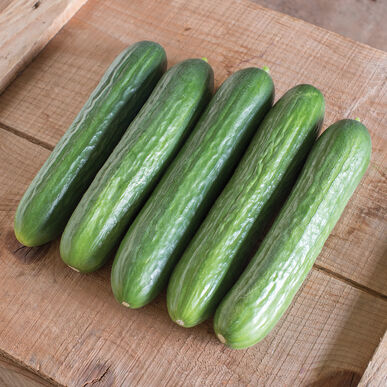 Katrina Seedless and Thin-skinned Cucumbers