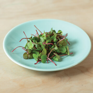 Radish, Red Stem Microgreen Vegetables