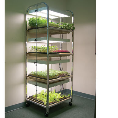 Compact Seedling Light Cart – 8 Trays, 320 Watts Grow Lights and Carts
