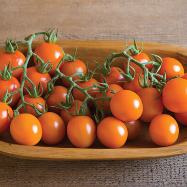Clementine Cocktail Tomatoes