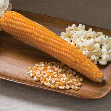 Robust 997 Dry Corn