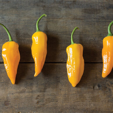 Golden Ghost Hot Peppers