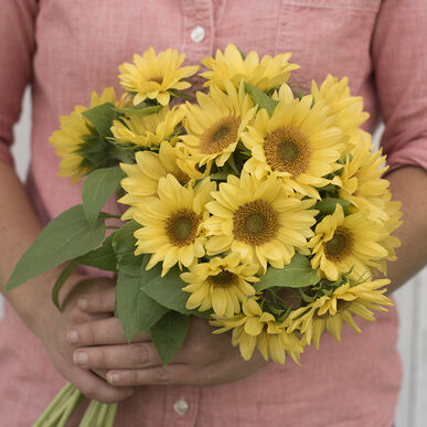 Peach Passion Tall Sunflowers