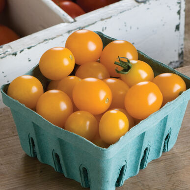 Yellow Mini Cherry Tomatoes