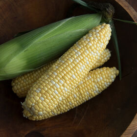 Enchanted Sweet Corn