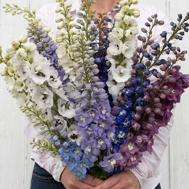 Magic Fountains Mix Delphinium