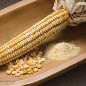 Nothstine Dent Dry Corn