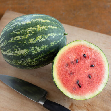 Mini Love Diploid Watermelons