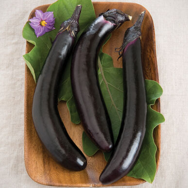 Orient Express Asian Eggplants