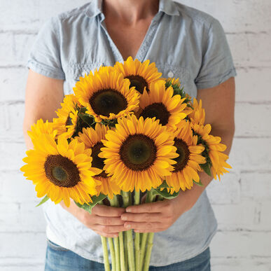 Sunrich Summer Provence Tall Sunflowers