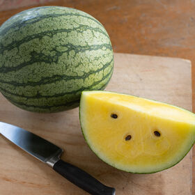 Sureness Diploid Watermelons