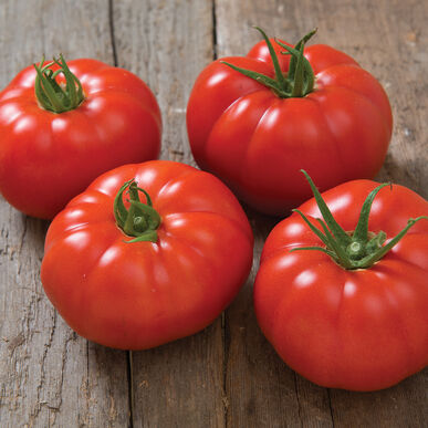 Marbonne Specialty Tomatoes