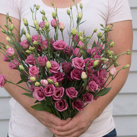 Doublini Rose Pink Lisianthus