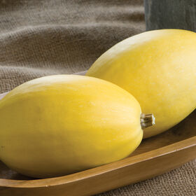 Pinnacle Winter Squash