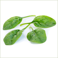 Sunangel Spinach Seeds