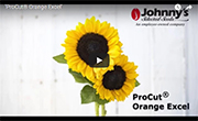 ProCut Orange Excel Sunflower