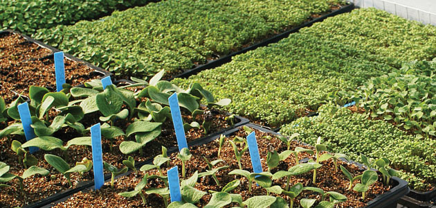 Succession Planting Intervals for Vegetables