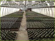 Greenhouse Flats