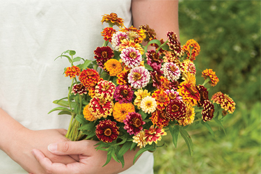 Zinnias range from the diminutive to the giant