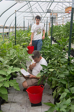 Johnny's Research Team Evaluates the Greenhouse Trials