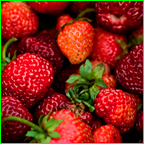 Protect Strawberries for Optimal Results