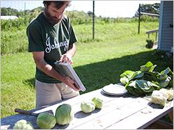 Cabbage Scoring